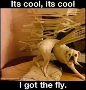 funny-dogs-i-got-the-fly